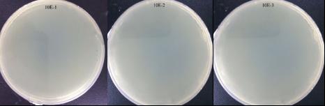Nanogenizer超高压细胞破碎仪 均质5次 大肠杆菌